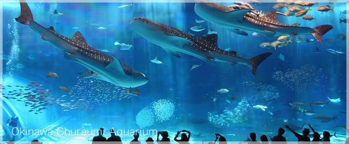 Okinawa-Churaumi-Aquarium-Ocean-Expo-Park-Japan