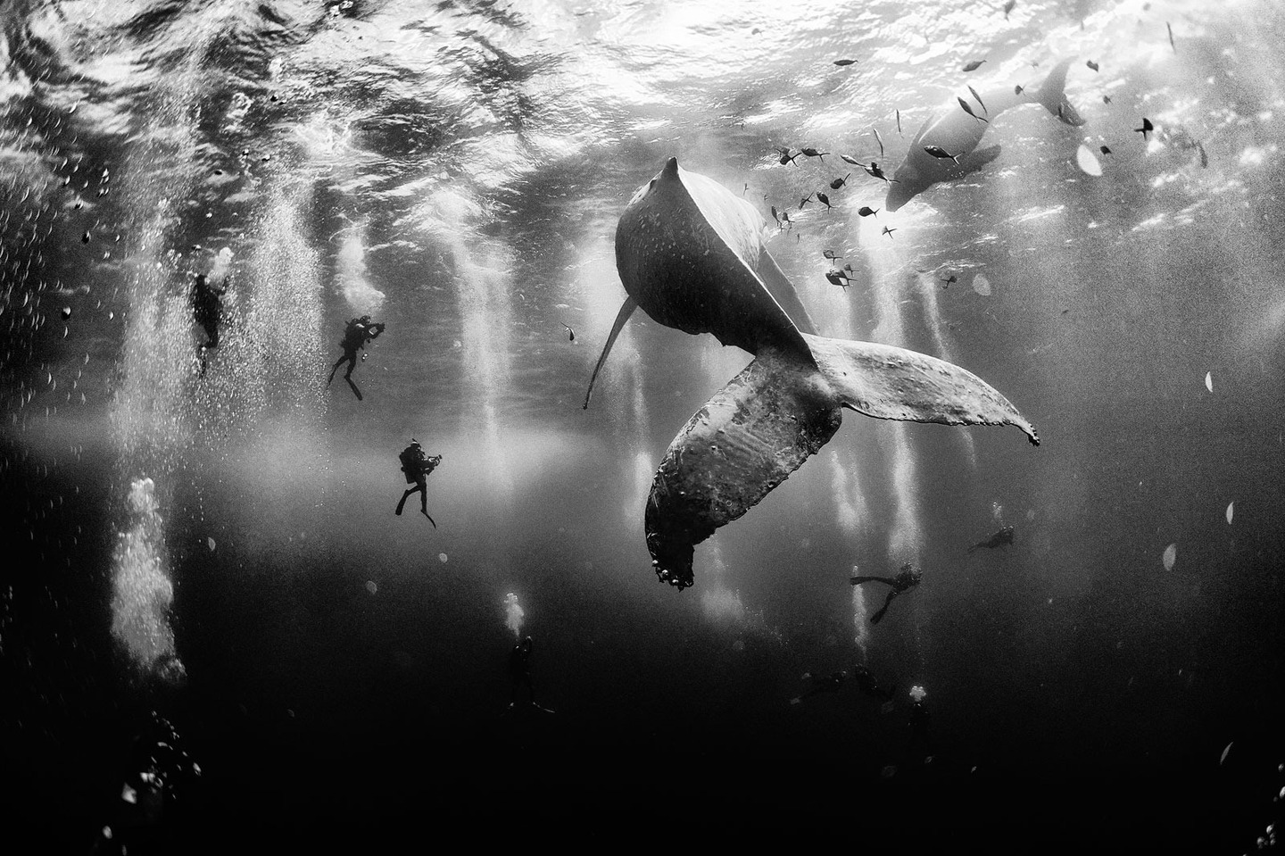 Grand-Prize-Anuar-Patjane-National-Geographic-Traveler-Photo-Contest-2015Floriuk