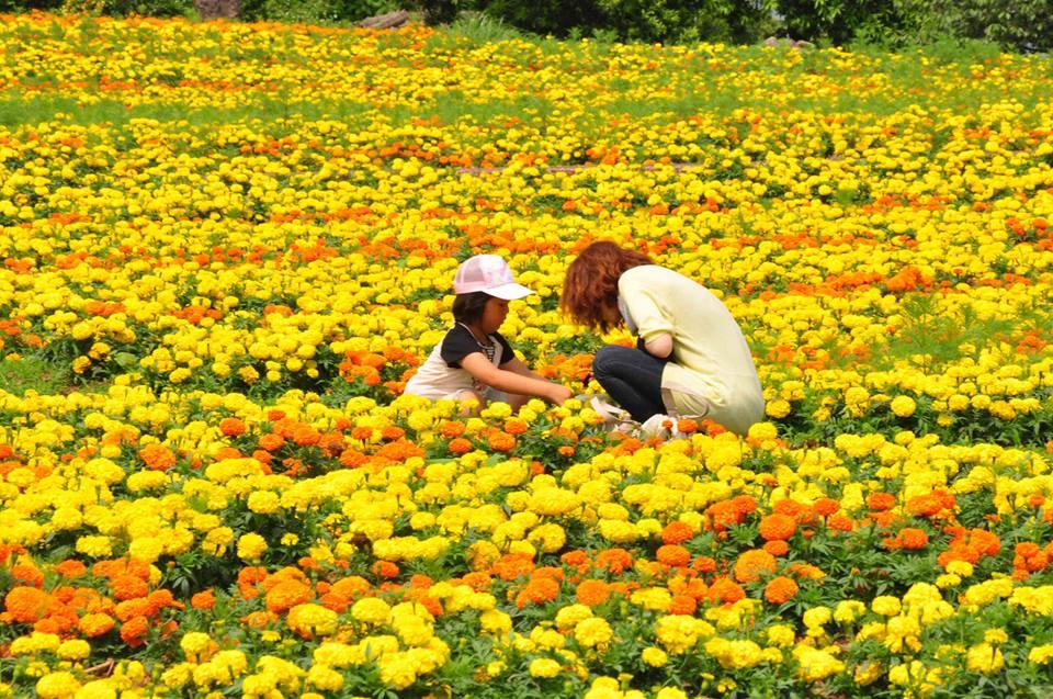 Nakonoshima-Island-Park-1