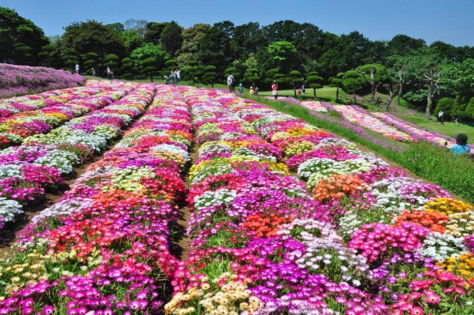 Nakonoshima-Island-Park-3
