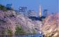 red-planet-asakusa-tokyo-sakura-blooming-season
